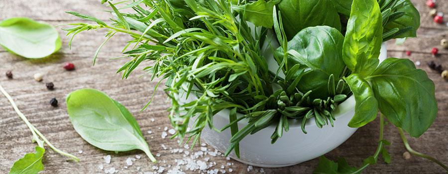 11 Plantes aromatiques qui soignent - Photo de plantes aromatiques : basilic, romarin...