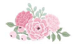 Pivoine de pivoines roses