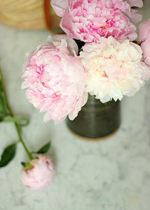 Bouquet de Pivoine - Photo