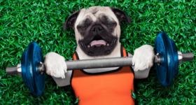 sports après 50 ans chien