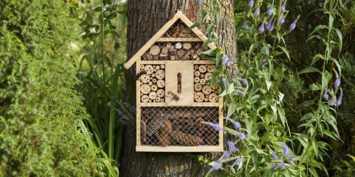 comment preserver la biodiversité dans son jardin