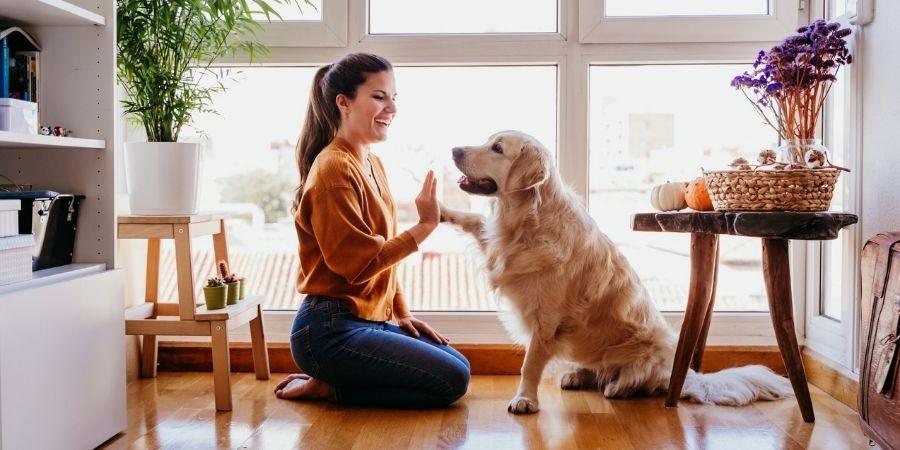 importance d'avoir un animal de compagnie