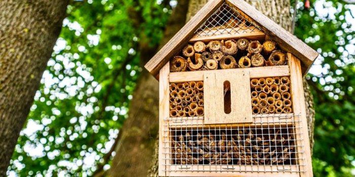maison a insectes DIY